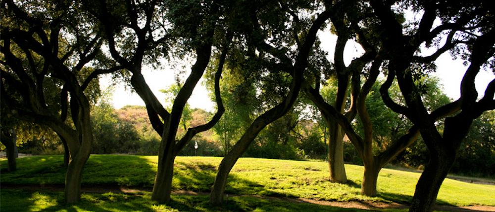 El Robledal Golf Madrid